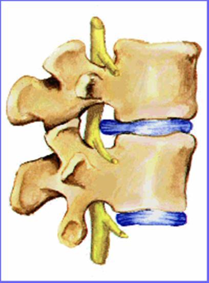 Anatom a de la espalda humana lesiones y patolog as for Agujeros femeninos