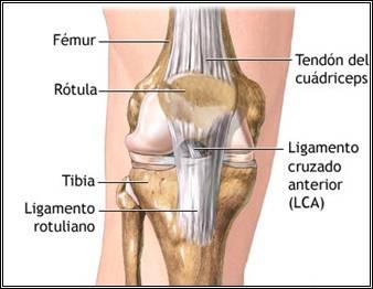 ligamentos rehabilitacion: