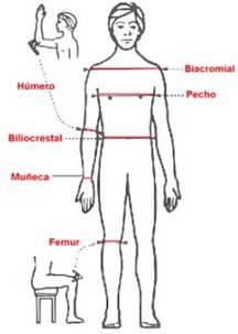Estimaci n de la composici n corporal medidas antropom tricas for Cuales son medidas antropometricas