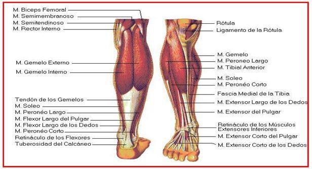 Rehabilitación de lesiones deportivas en el ligamento cruzado anterior