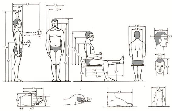 Antropometria for Antropometria de la vivienda pdf
