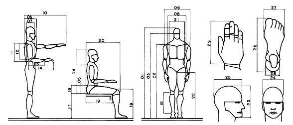 Antropometria kevincapacho for Cuales son medidas antropometricas