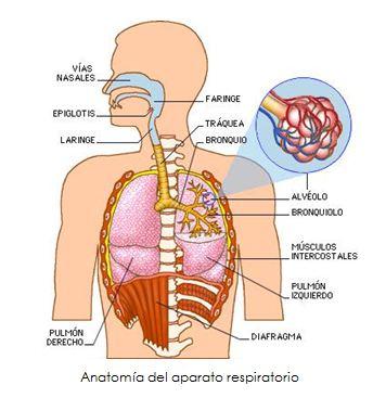 Progresión De Ejercicios Conscientes Para La Mejora De La Capacidad Respiratoria En Educación Física Salud