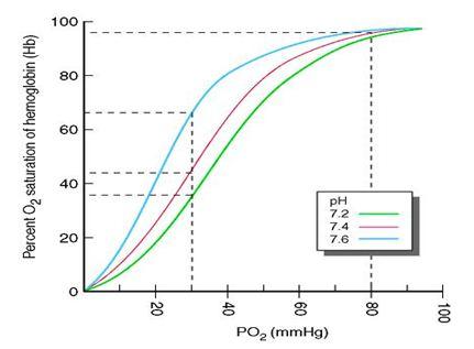 El Consumo Maximo De Oxigeno Saturacion Arterial De Oxigeno Y Rendimiento Fisico A Altitudes Elevadas