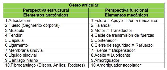 Perspectiva analítica vectorial de las palancas anatómicas en el ...