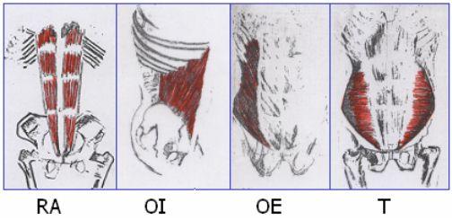 abdominales superiores e inferiores definicion