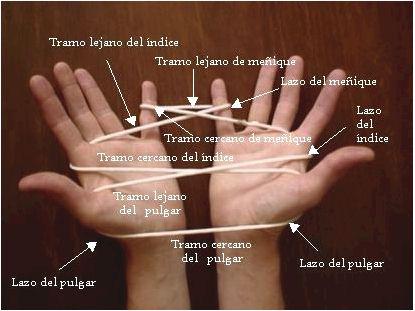 nombre de los dedos blueprint